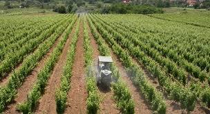 Osposobljavanje za maslinare i vinogradare/vinare.